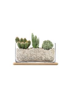 Lsa Plant oblong pot