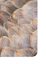 'Soffioni' dandelion print cashmere-silk scarf