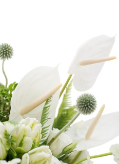 Ellermann Cotton & Lace in a vase